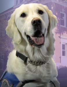 Angel is an LCC K-9 Comfort Dog at St John's Lutheran in La Grange, Illinois